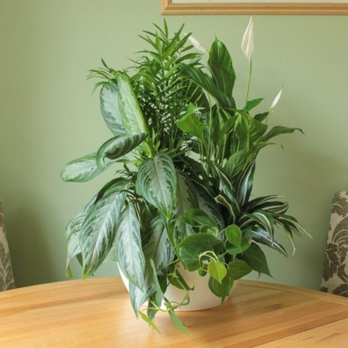 Mixed Bowl of 5 Live Plants White