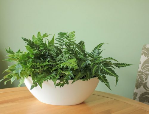 Hard to Kill House Plants – Our Top 10