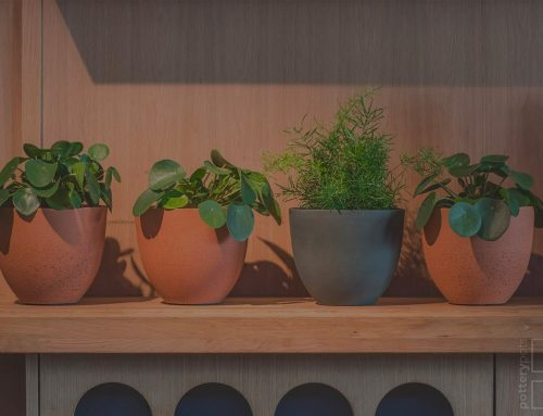 Indoor Plant Soil and Where to Get It
