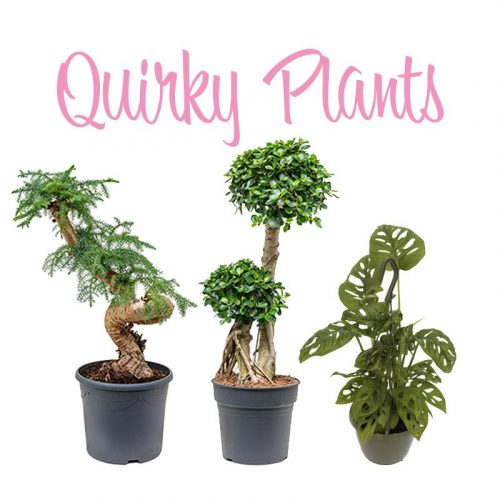 Quirky Plants