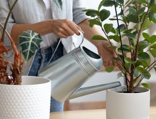 3 Favourite Plants for an Office Environment